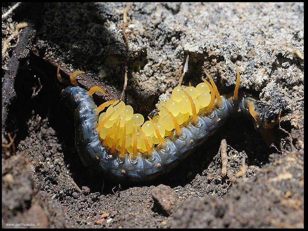 Foto di insetti strani 557