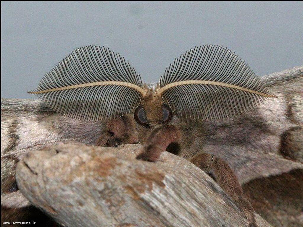 Foto di insetti strani 558