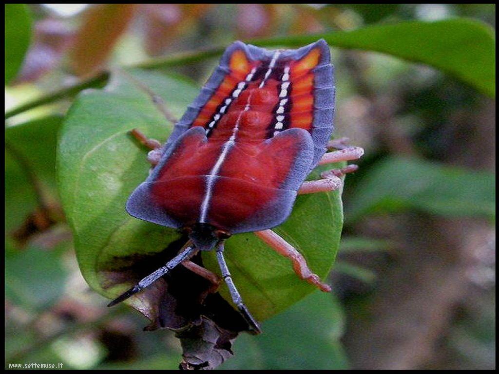 Foto di insetti strani 559
