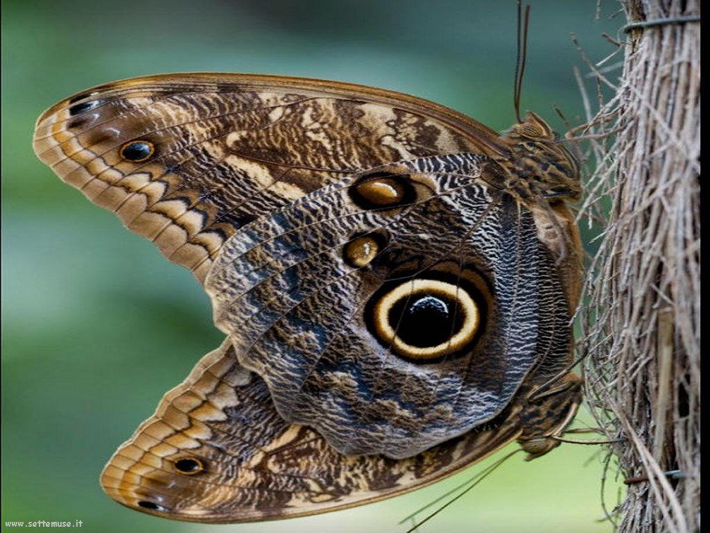 Foto di insetti strani 560