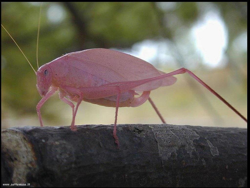 Foto di insetti strani 561