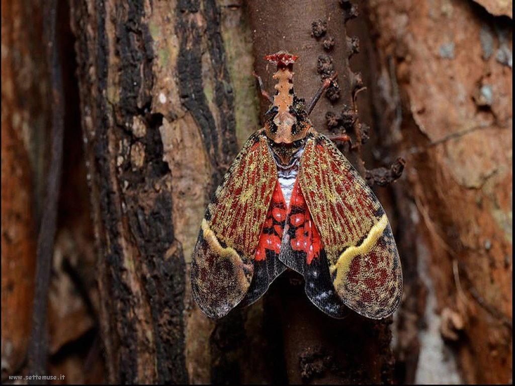 Foto di insetti strani 563