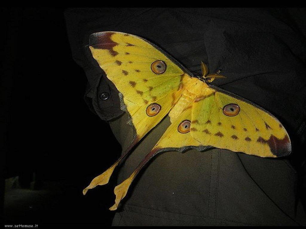 Foto di insetti strani 564