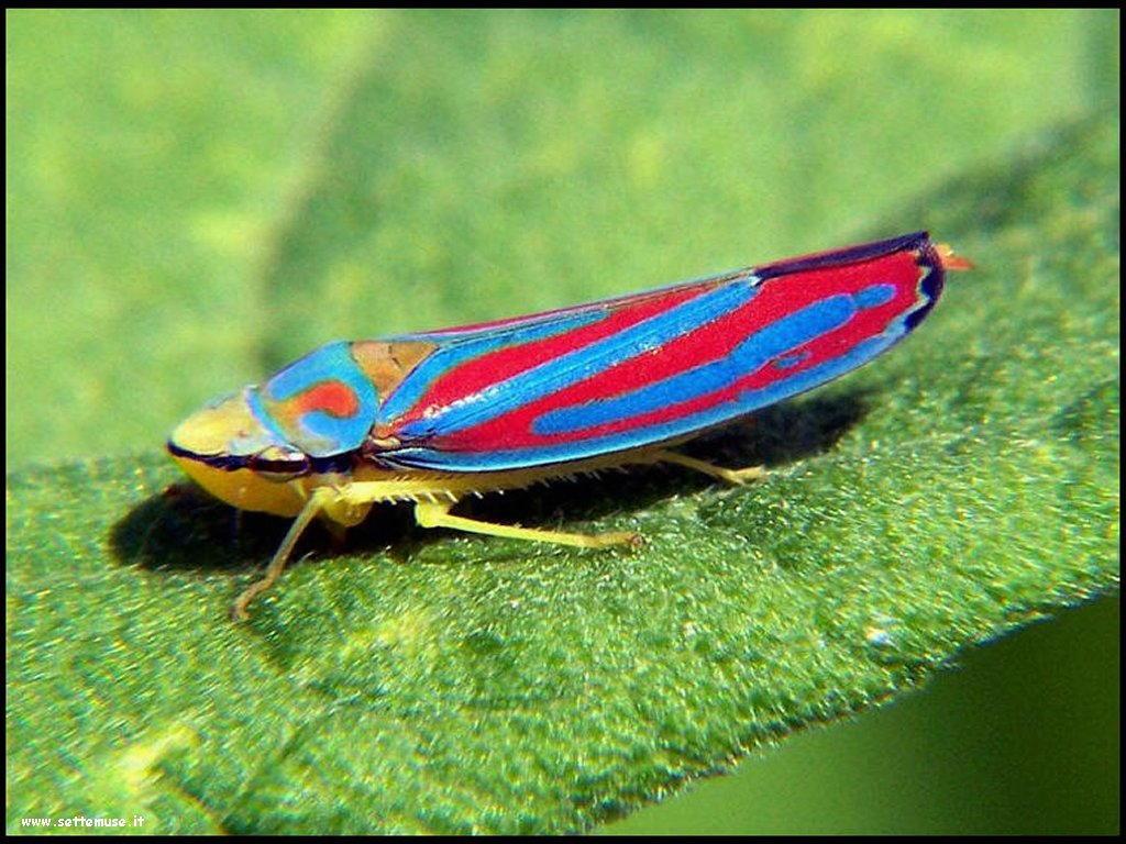Foto di insetti strani 566