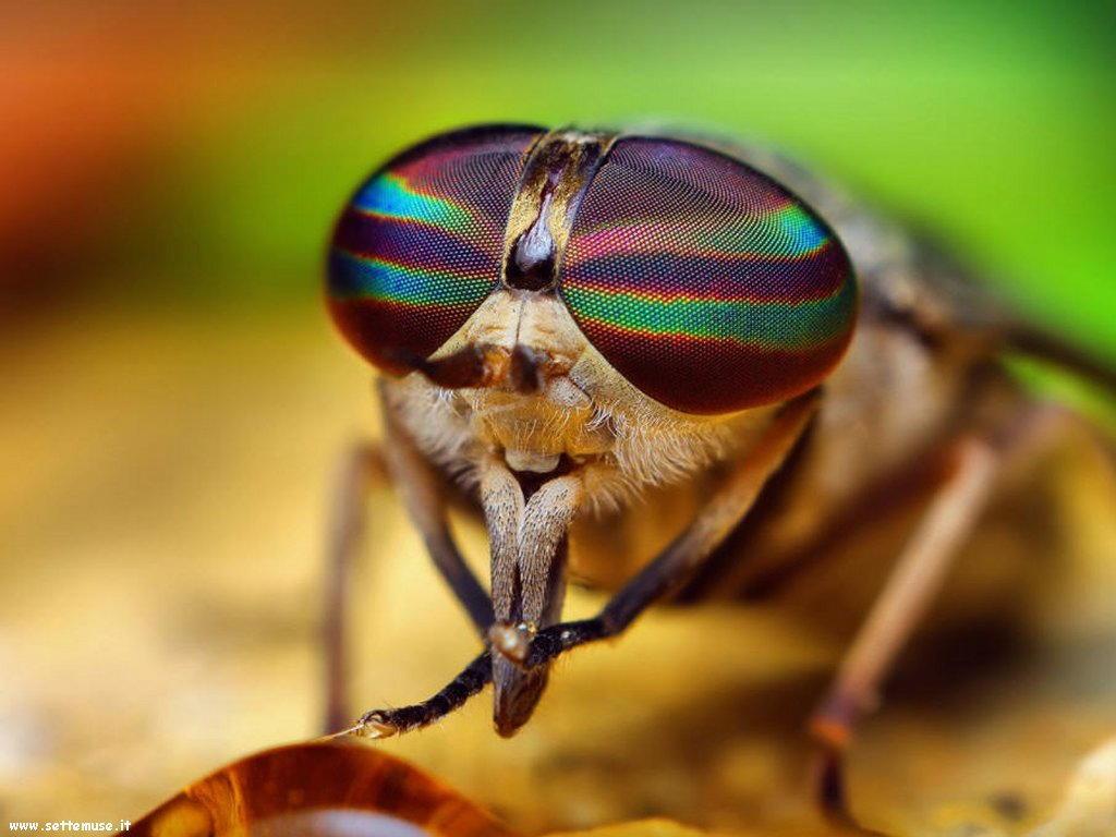 Foto di insetti strani 567