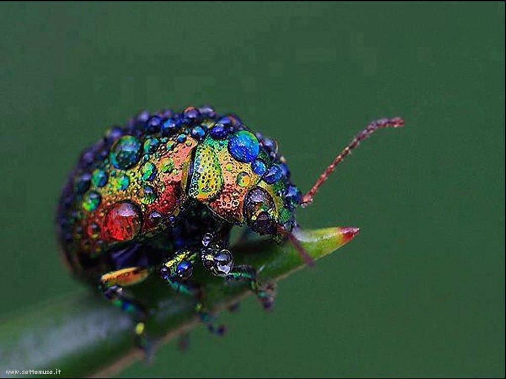 Foto di insetti strani 568