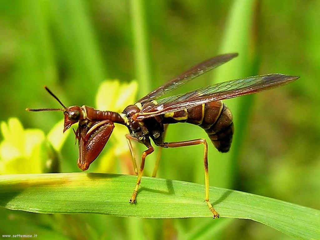 Foto di insetti strani 569