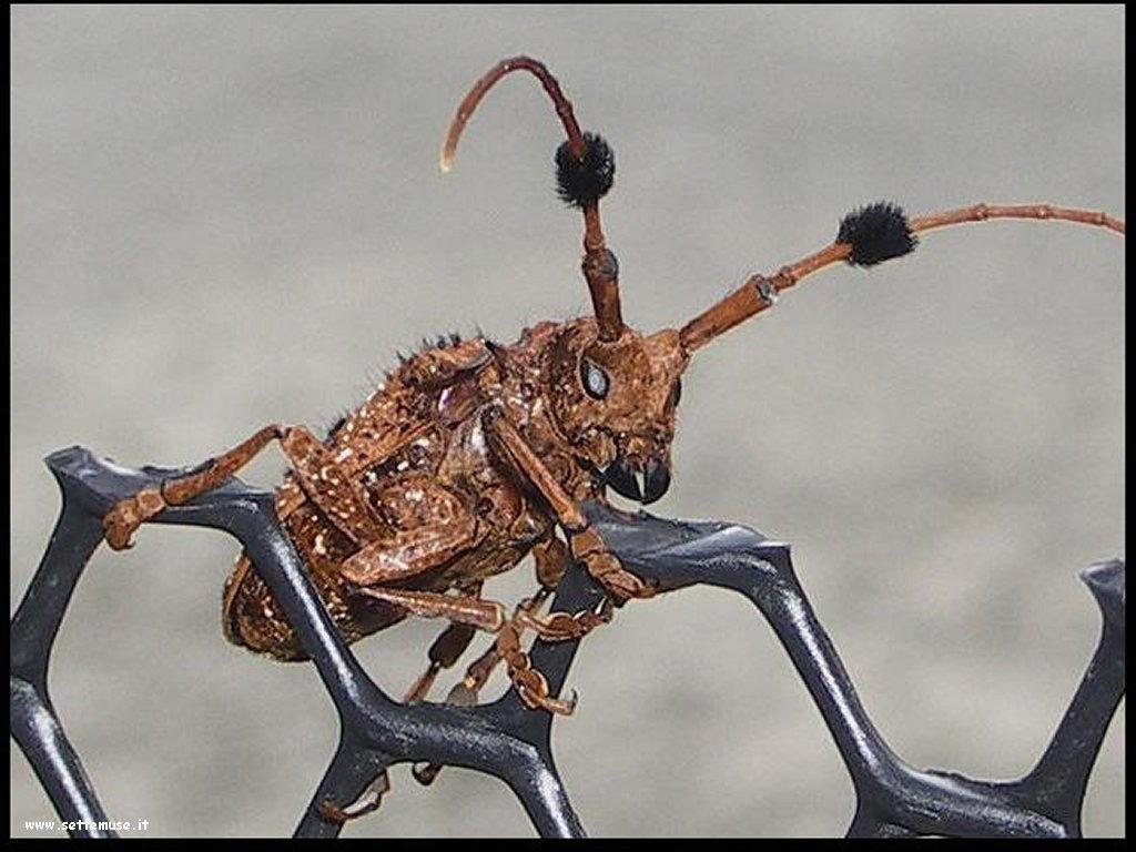 Foto di insetti strani 570