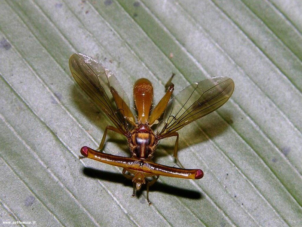 Foto di insetti strani 571