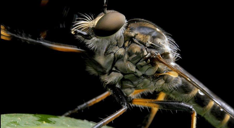 Foto di insetti strani 574