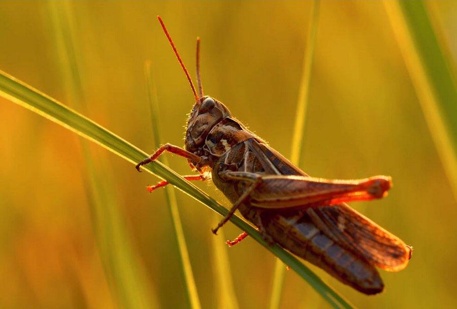 Foto di insetti strani 575