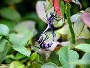 Foto sfondi libellule
