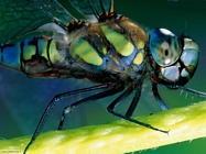 Foto sfondi mosche