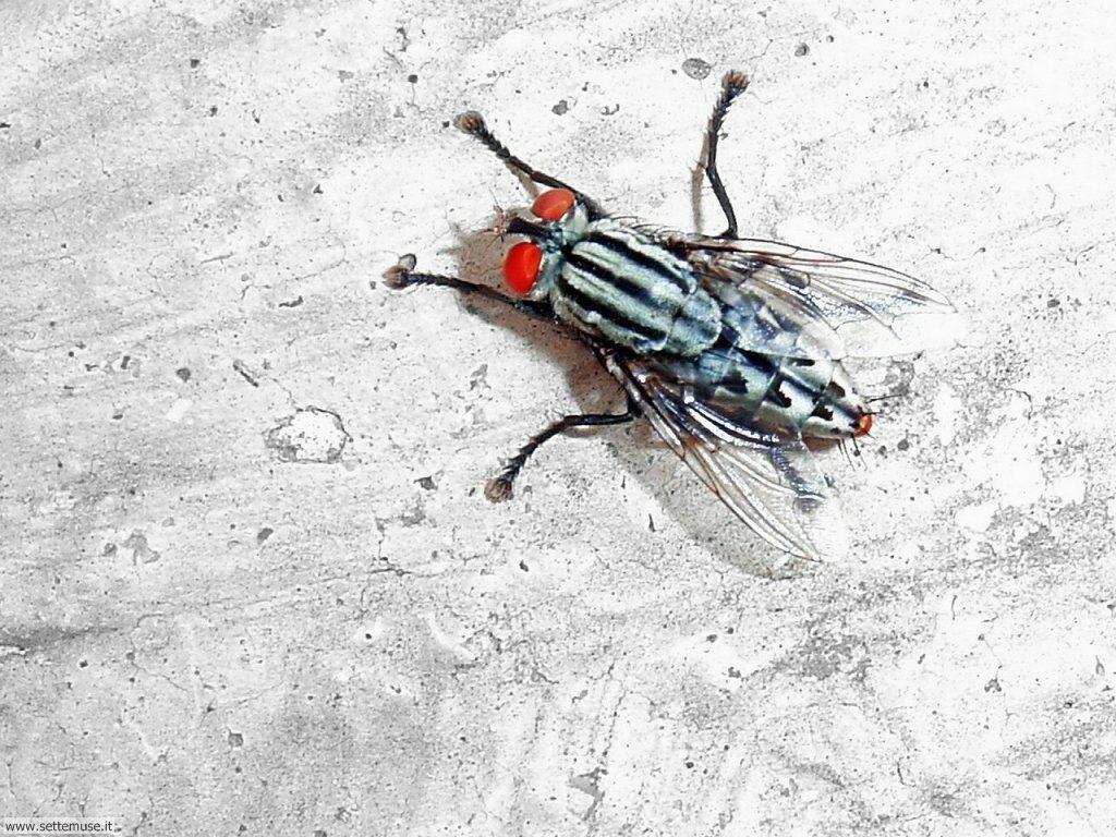 foto di mosche per sfondi