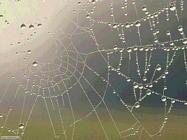 Foto sfondi ragni e ragnatele
