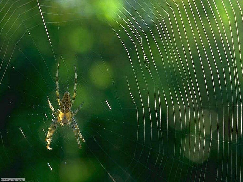 foto di ragni per sfondi