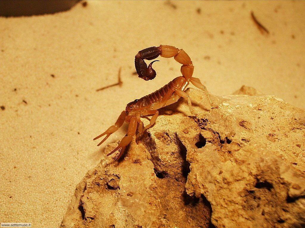 Foto di Scorpioni 007