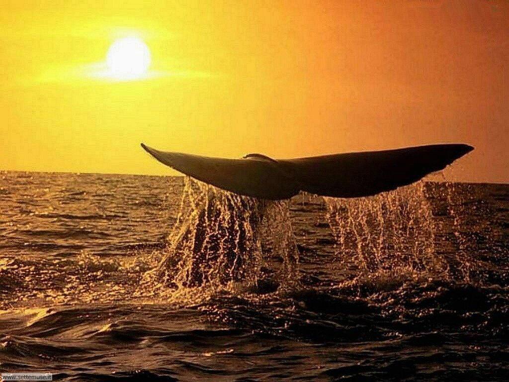 foto di balene e orche per sfondi