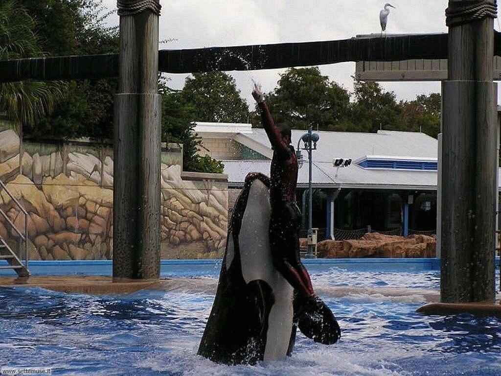 Sfondi balene e orche 003
