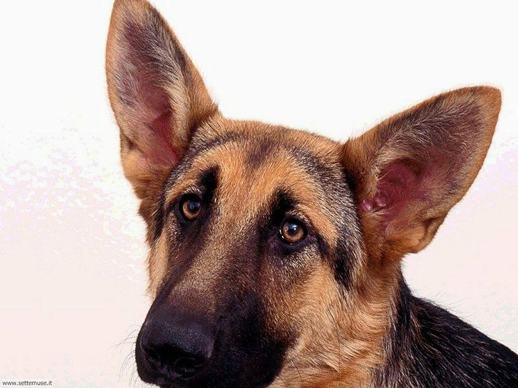 mammiferi cani e cuccioli _10.jpg