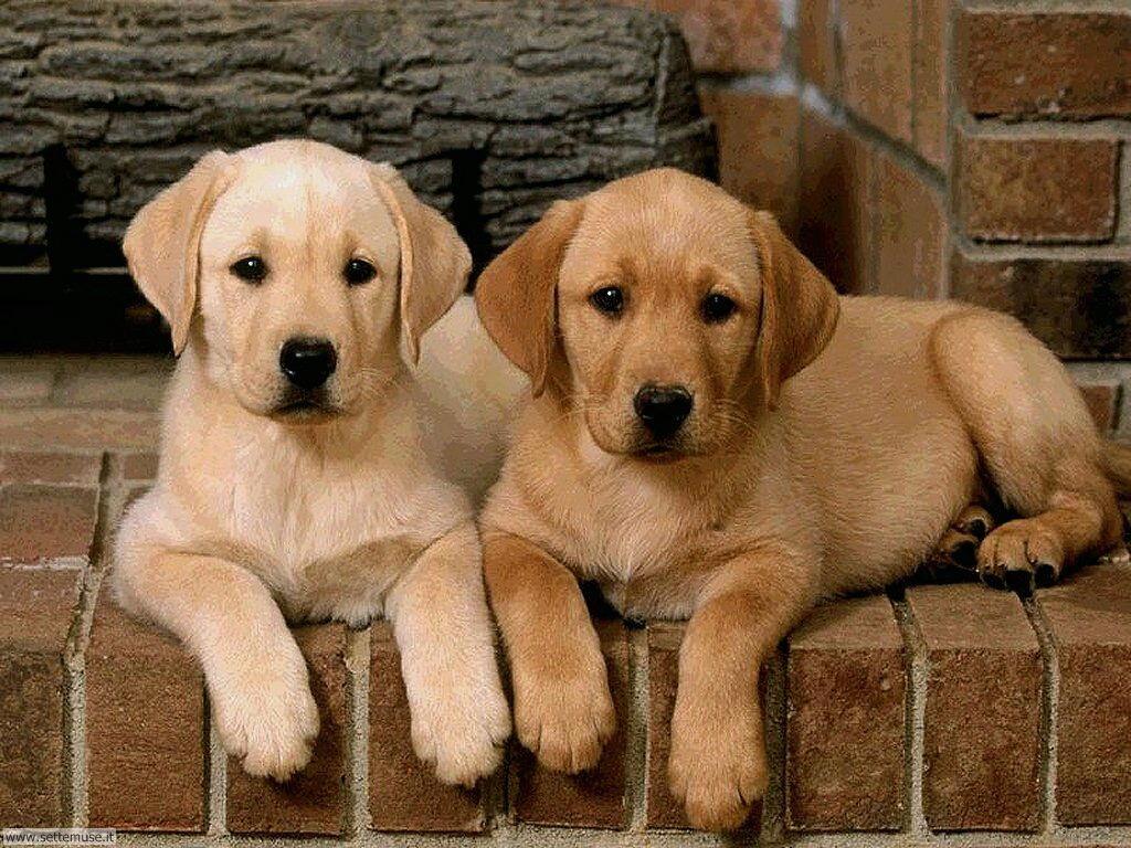 mammiferi cani e cuccioli _14.jpg