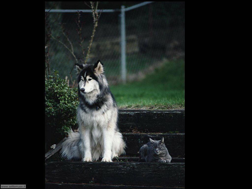 mammiferi cani e cuccioli _18.jpg