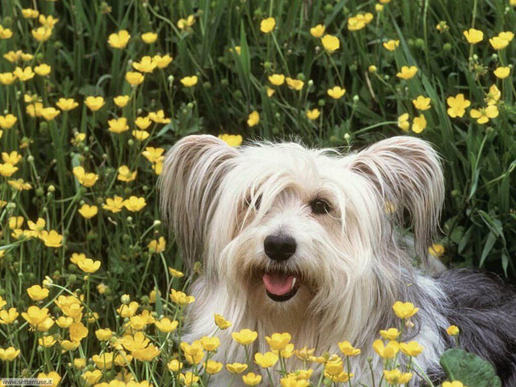 mammiferi cani e cuccioli _21.jpg