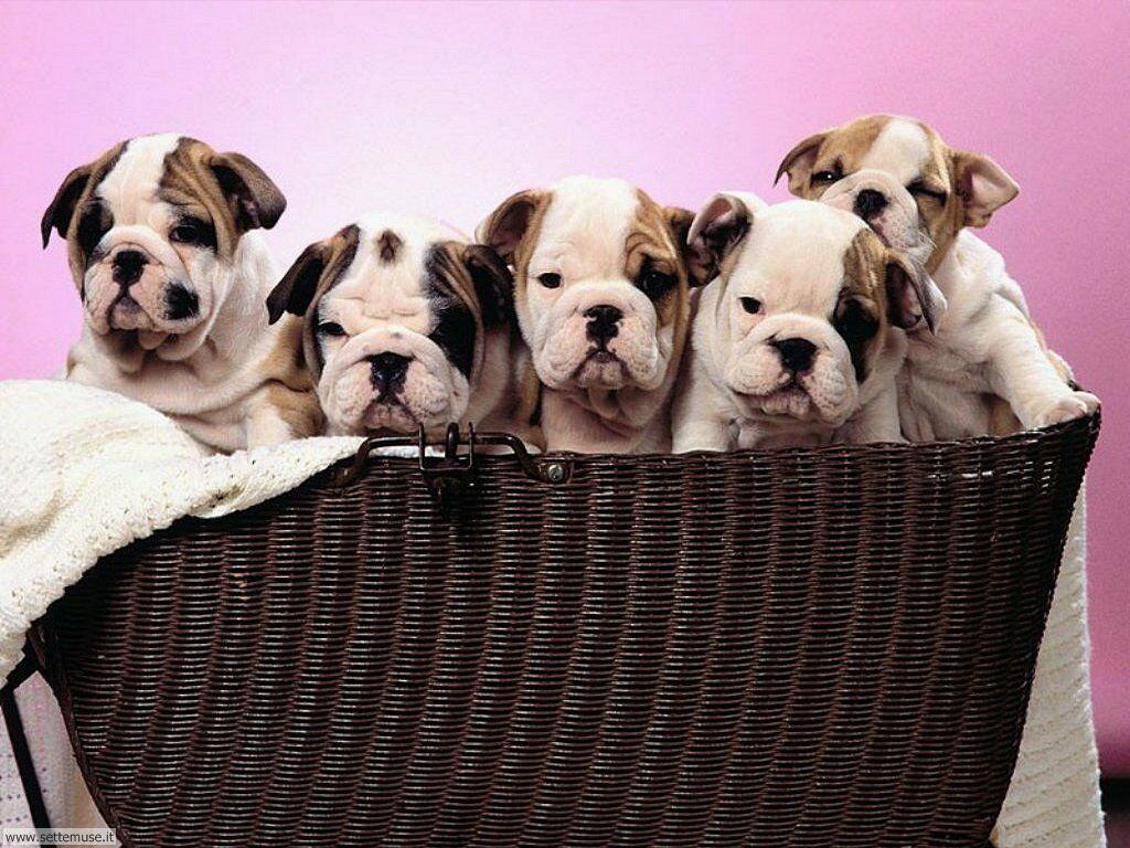 mammiferi cani e cuccioli _22.jpg