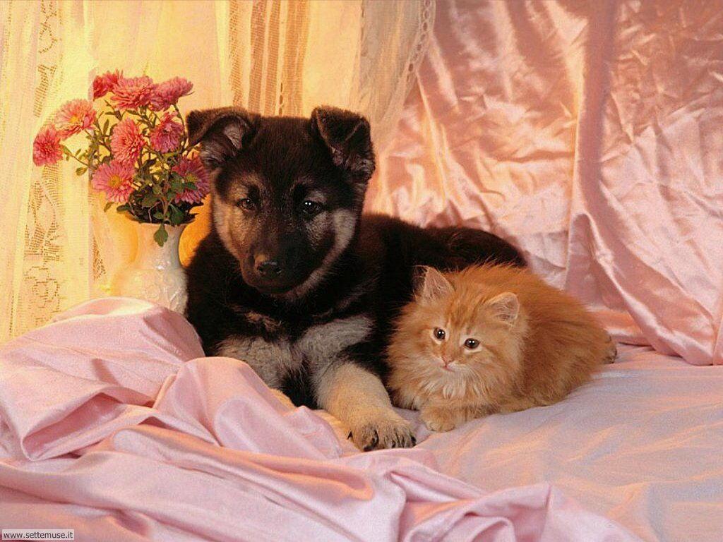 mammiferi cani e cuccioli _24.jpg