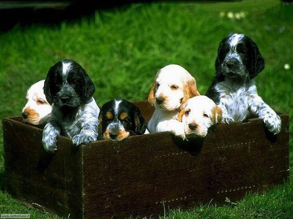 Foto sfondi Cani e cuccioli 002