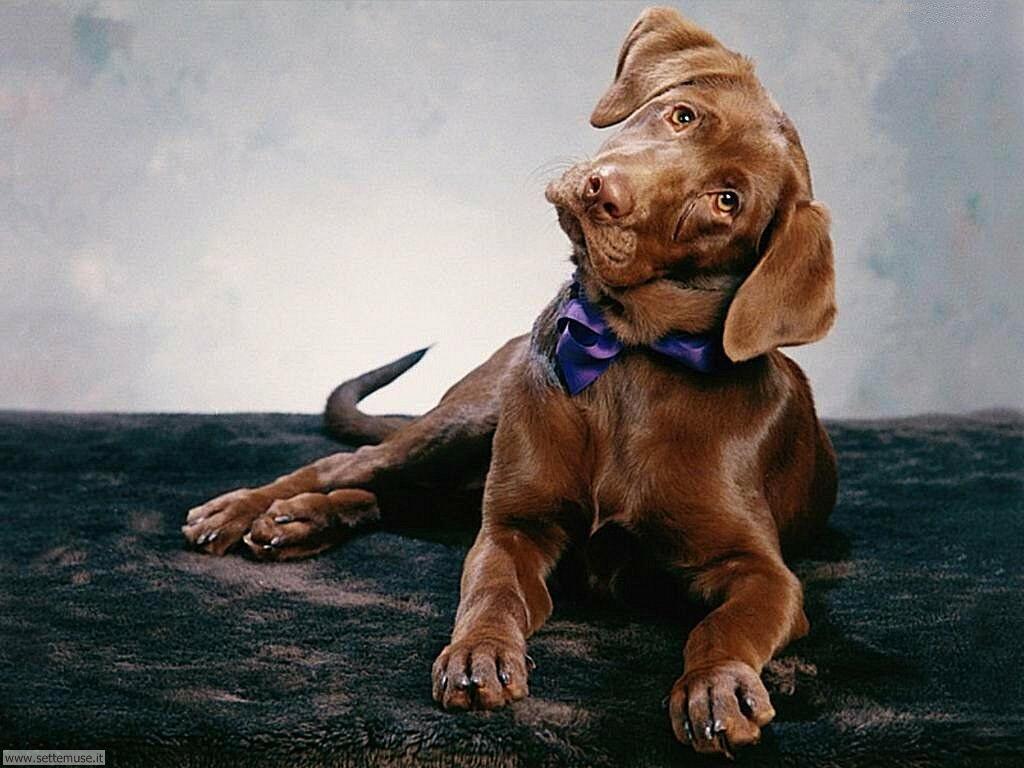 Foto sfondi Cani e cuccioli 003