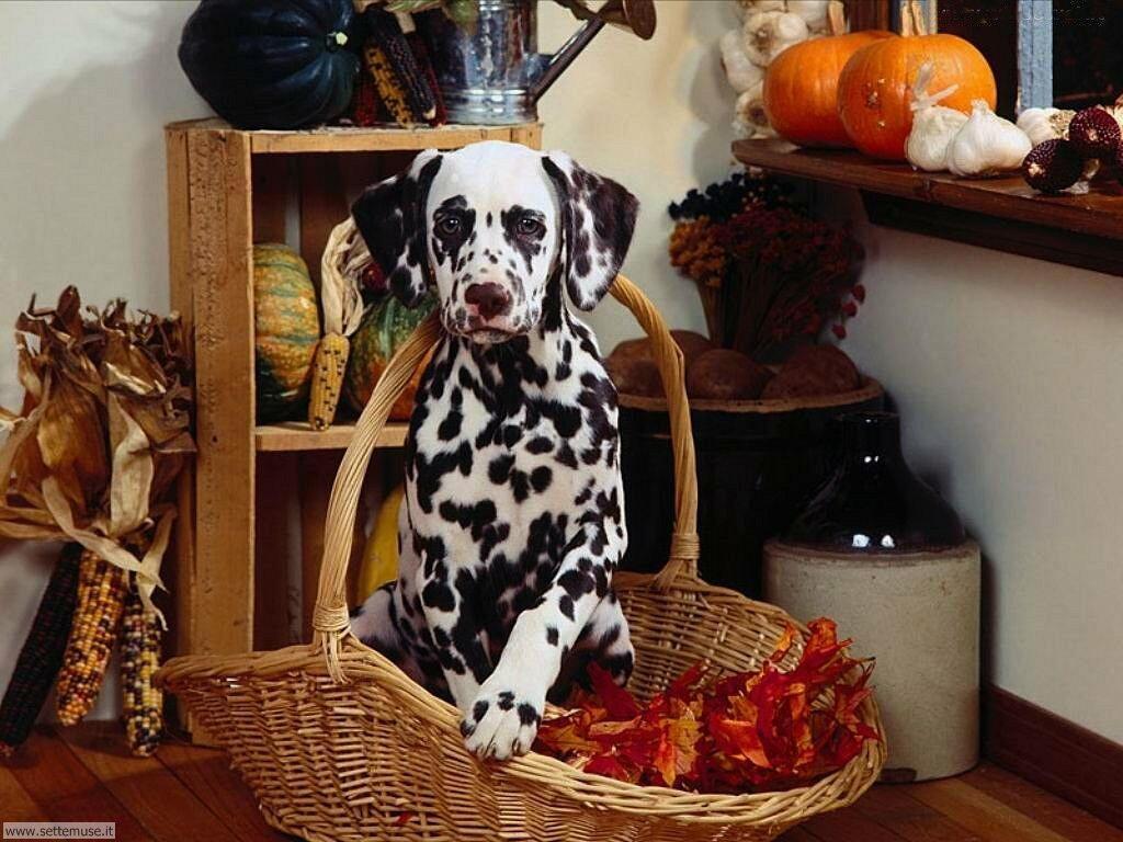 Foto sfondi Cani e cuccioli 006