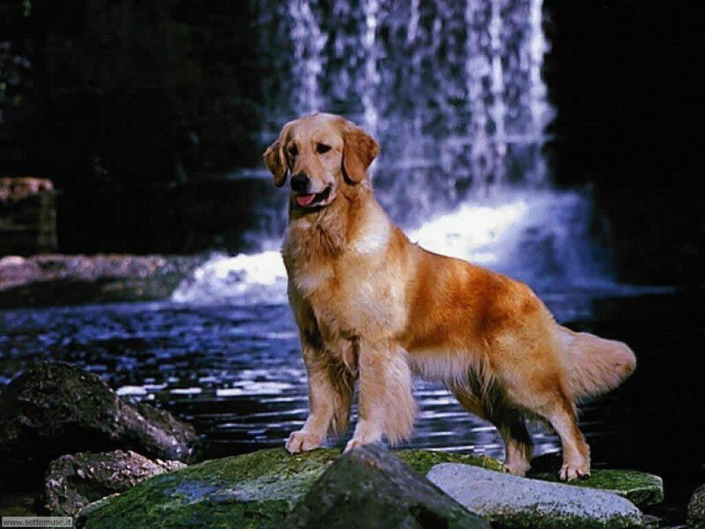 Foto sfondi Cani e cuccioli 009