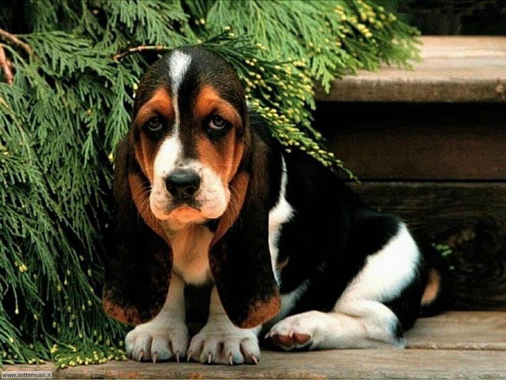 Foto sfondi Cani e cuccioli 010