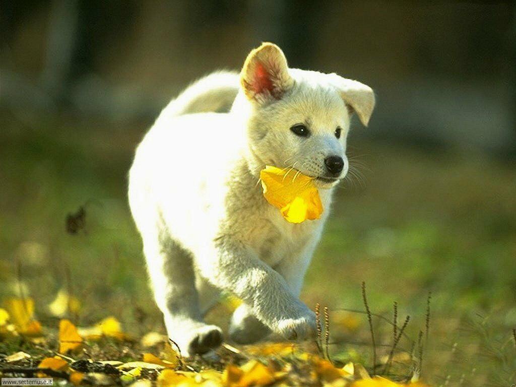Foto sfondi Cani e cuccioli 012