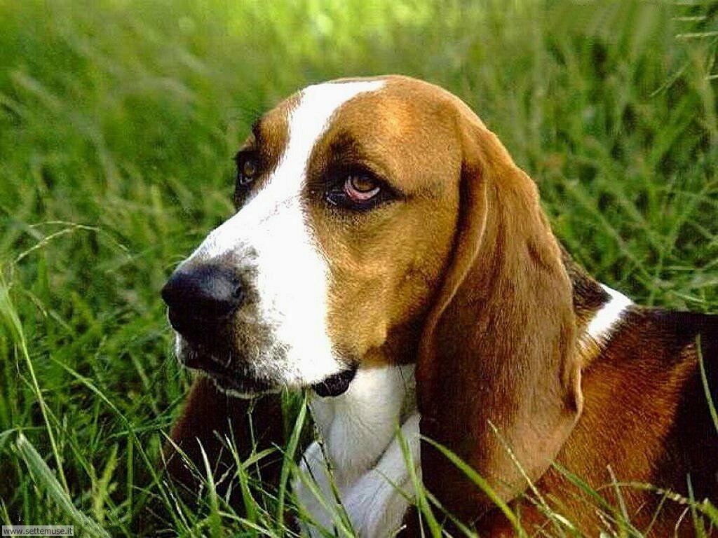 Foto sfondi Cani e cuccioli 014
