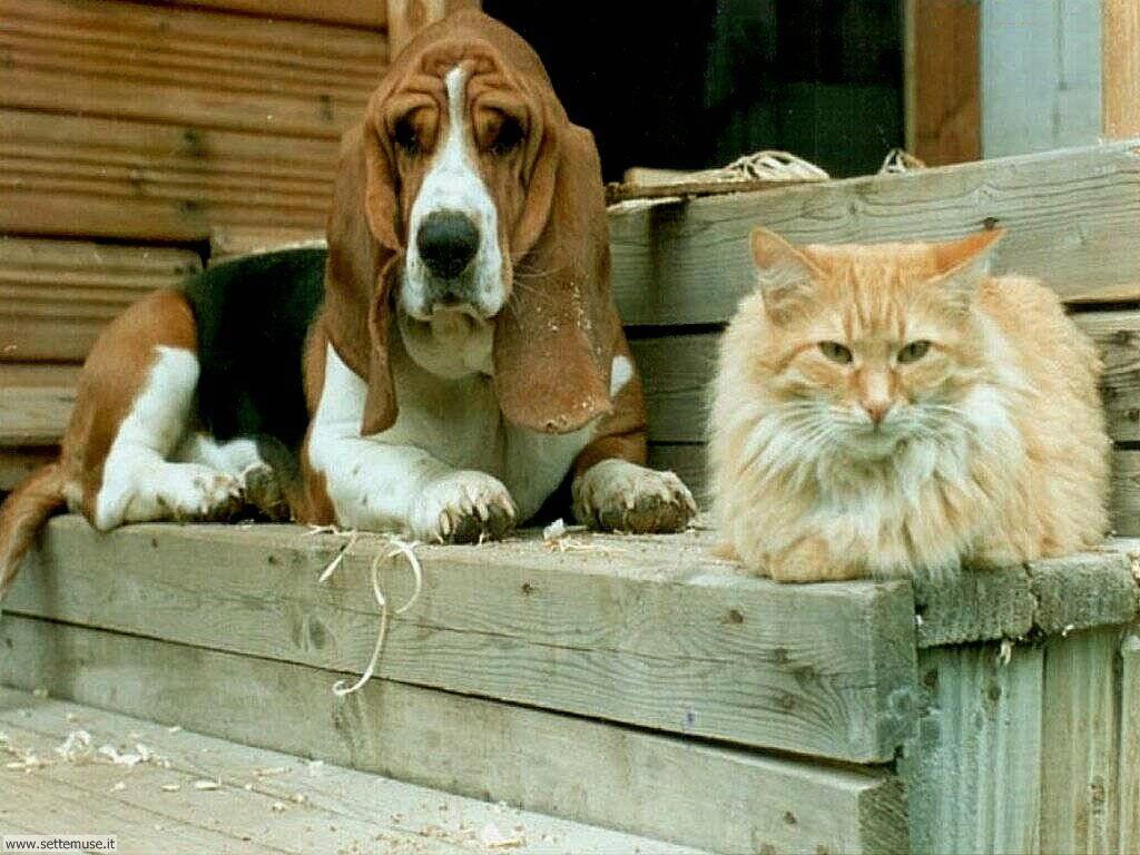 Foto sfondi Cani e cuccioli 015