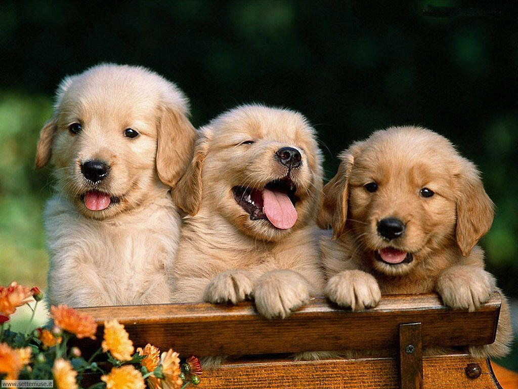 Foto sfondi Cani e cuccioli 017