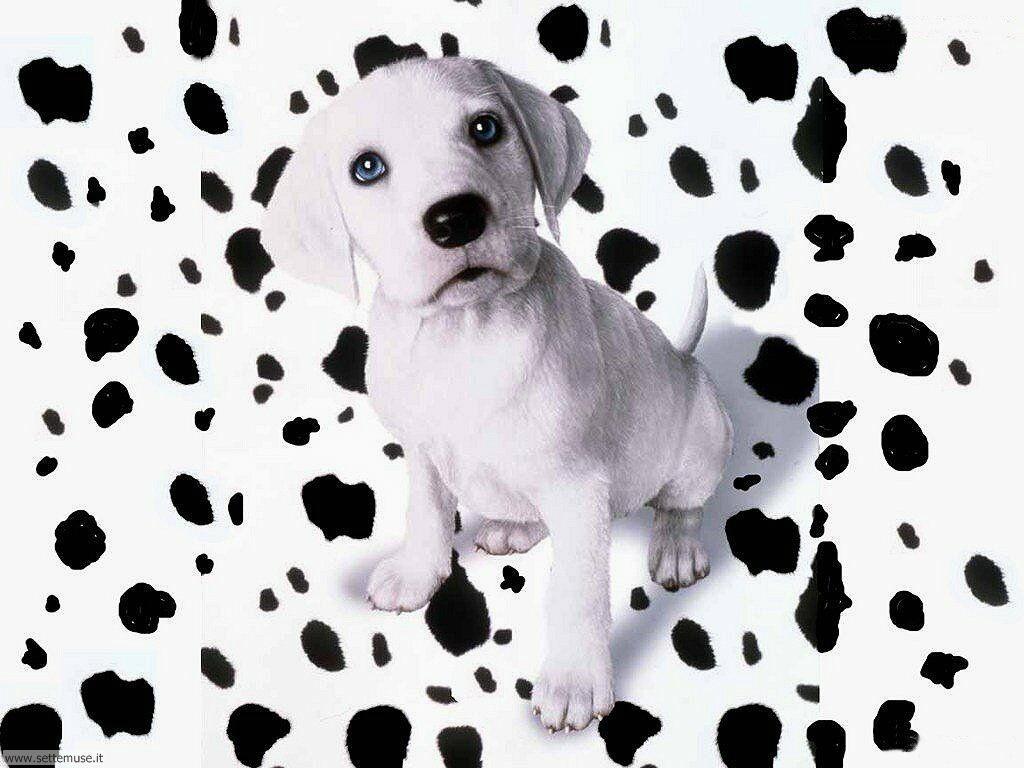 Foto sfondi Cani e cuccioli 018
