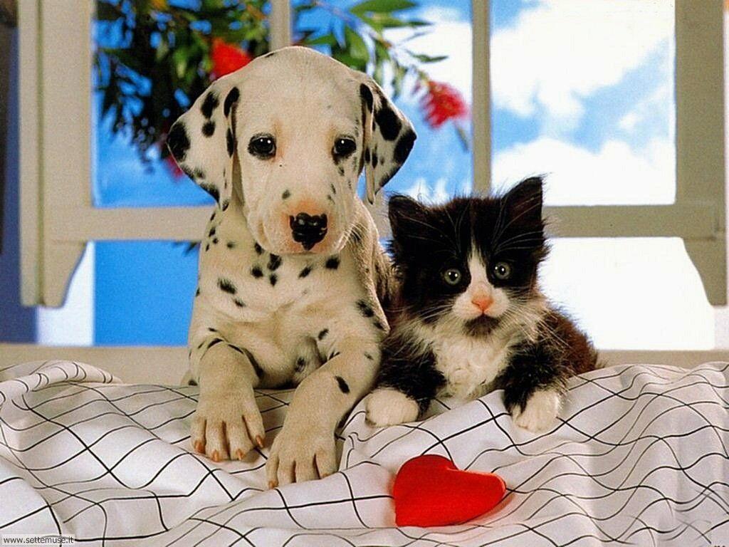 Foto sfondi Cani e cuccioli 019