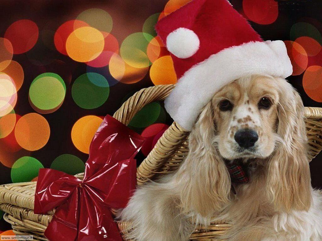 Foto sfondi Cani e cuccioli 020