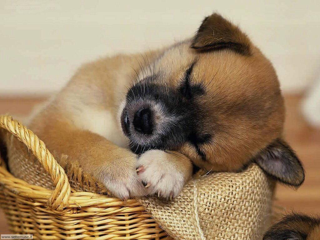 Foto sfondi Cani e cuccioli 022
