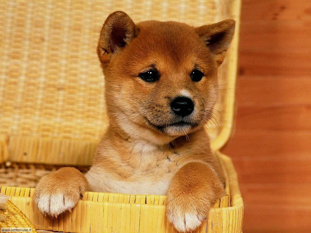 Foto sfondi Cani e cuccioli 023