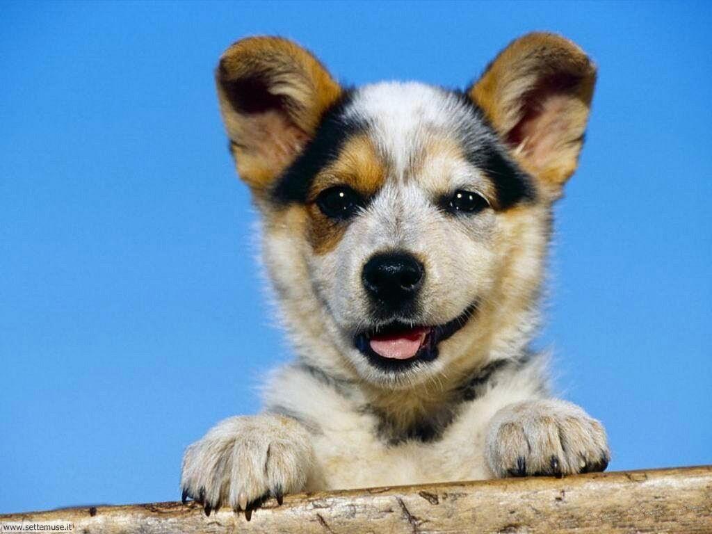 Foto sfondi Cani e cuccioli 028