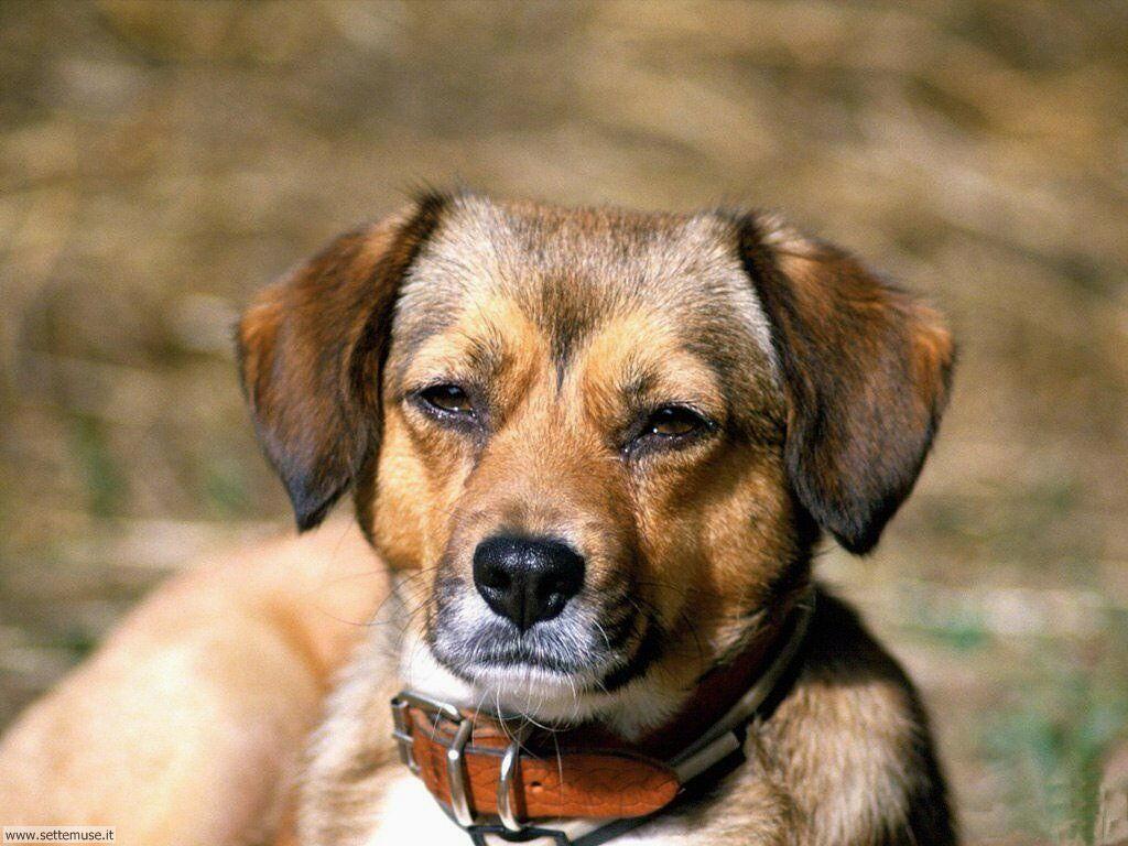 Foto sfondi Cani e cuccioli 029