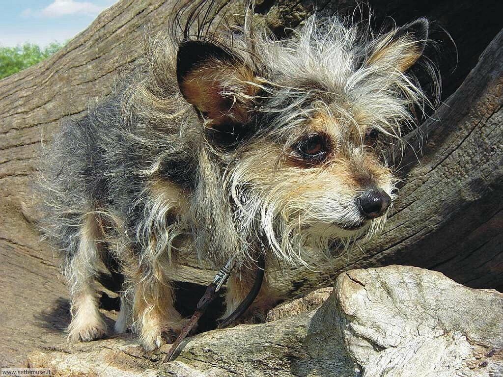 Foto sfondi Cani e cuccioli 031
