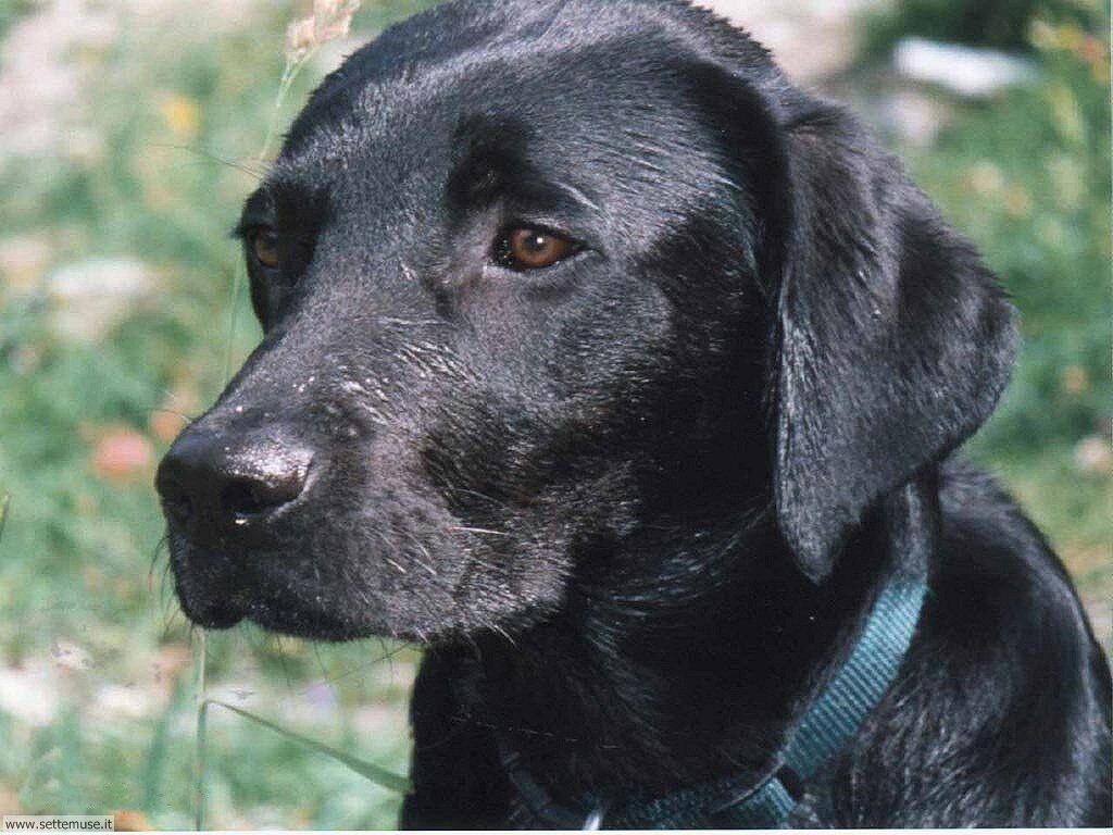 Foto sfondi Cani e cuccioli 034