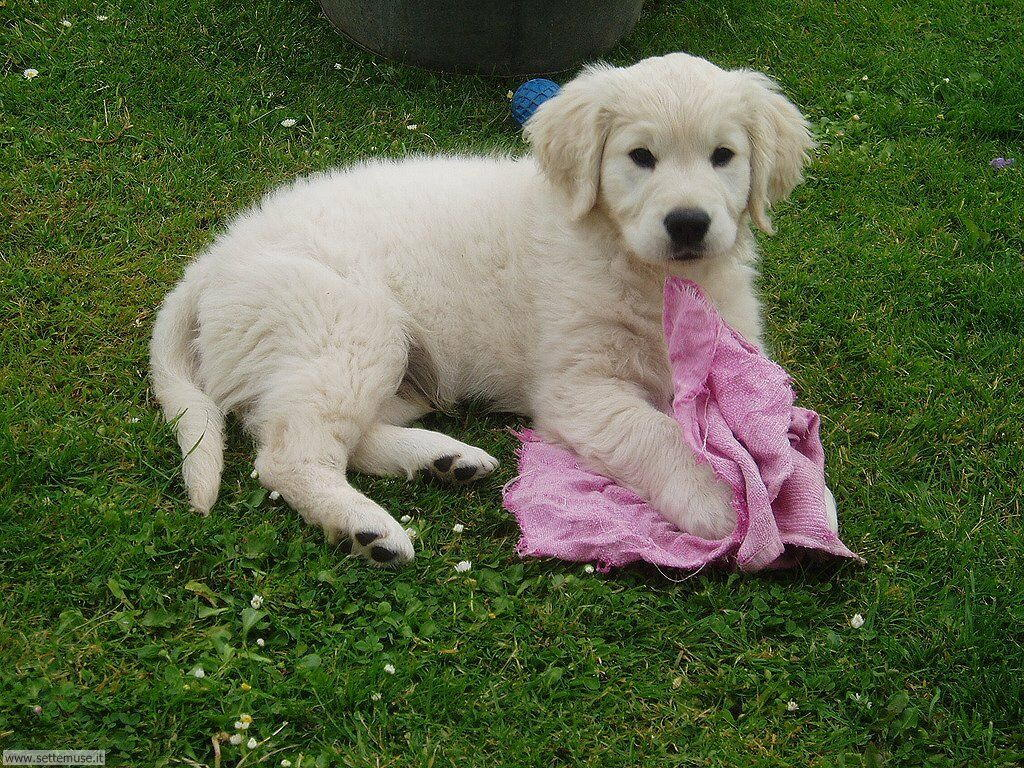 Foto sfondi Cani e cuccioli 036