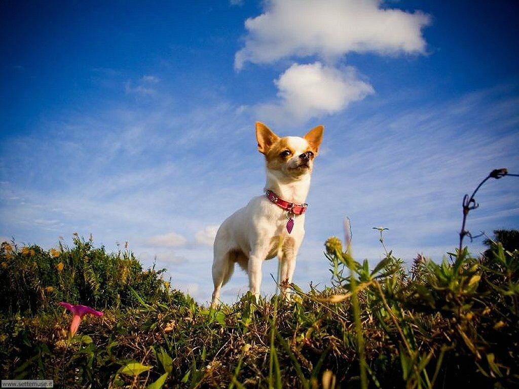 Foto sfondi Cani e cuccioli 037