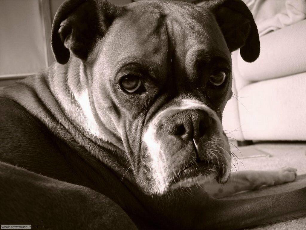 Foto sfondi Cani e cuccioli 039